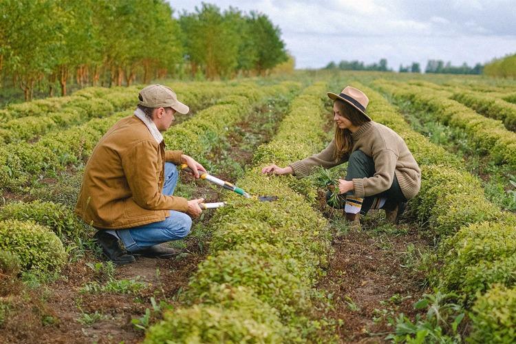 Two gardeners working in a field.