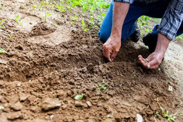 A gardener digging soil and planting seeds.