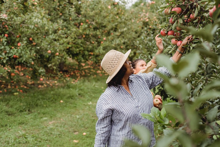 Two women apple picking at a farm.