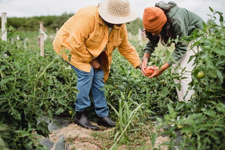 Two farmers working in a field.
