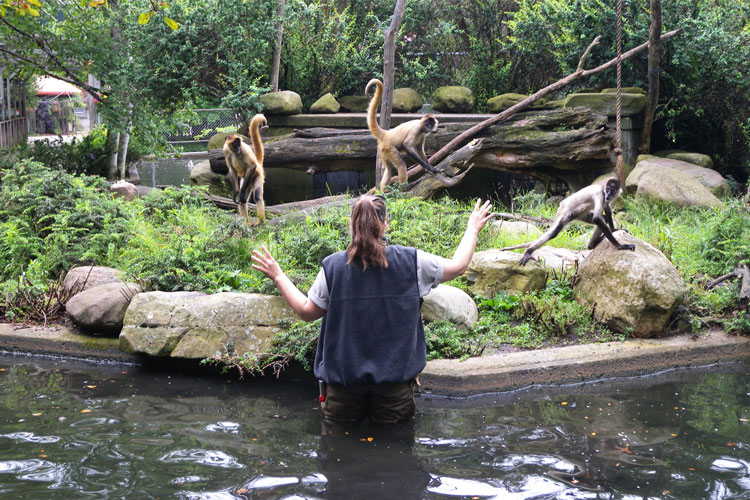 A zookeeper at the Erie Zoo interacting with the animals.